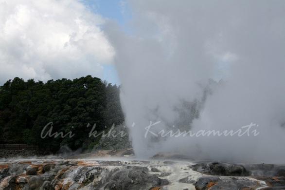 Prince of Wales Feathers geyser