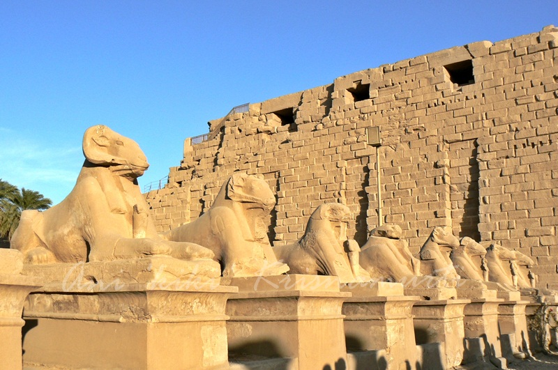 5P1000812avenue of ram headed sphinxes-