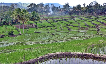 moni-rice terrace