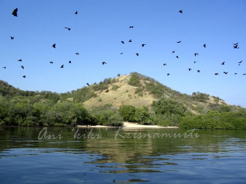 ontoloe island-flying foxes