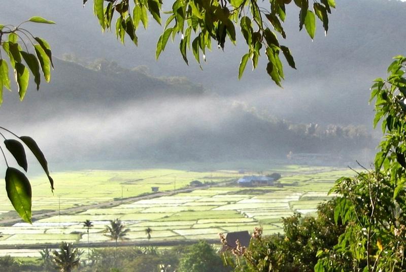 misty morning at Moni