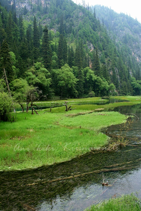 14.SWAN LAKE