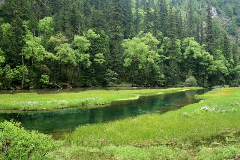 15.SWAN LAKE