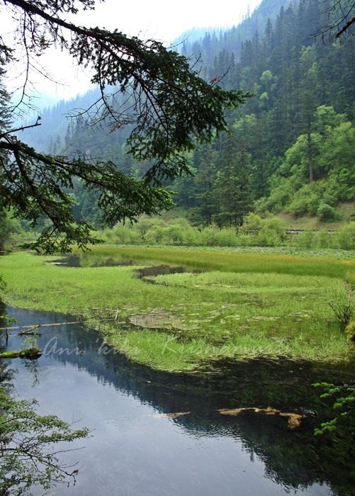 GRASS LAKE