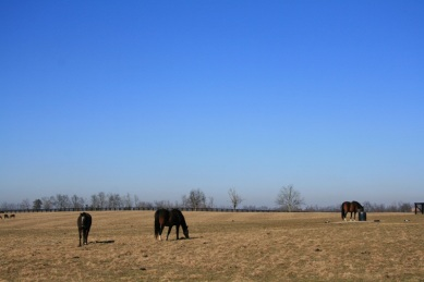 6.horse country