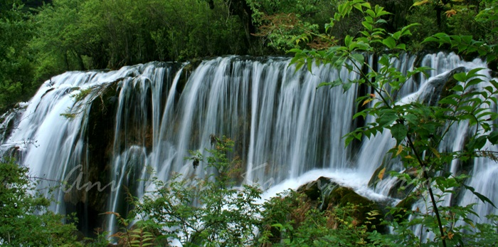 64.SHUZHENG FALL-2