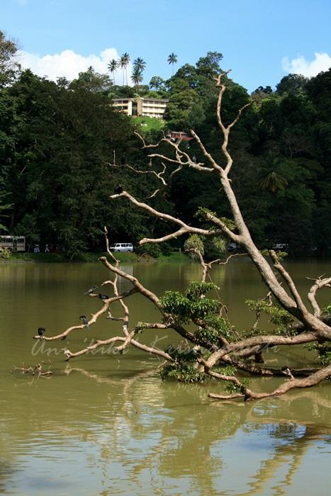 IMG_3589 KANDY LAKE