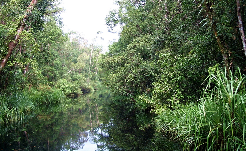 central kalimantan-tanjung puting national park