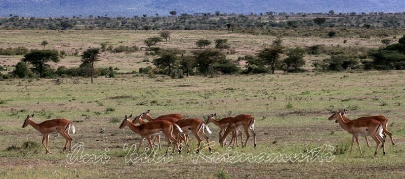 IMG_4169--grant gazelle