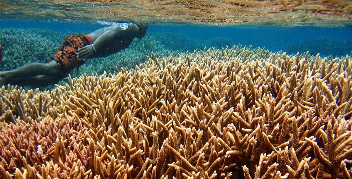 indonesia-west papua-rajaampat underwater