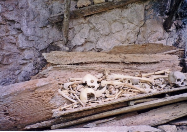 londa-bones&skulls
