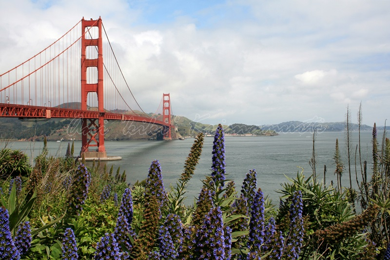 golden gate bridge, san francisco, US